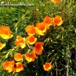 Photo Essay: Shades of Spring at Henry Coe State Park