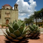 Photo Essay: Plants, Landscapes, and Landmarks in Oaxaca