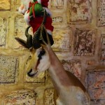Photo of the Day: Have Yourself a Namibian Christmas