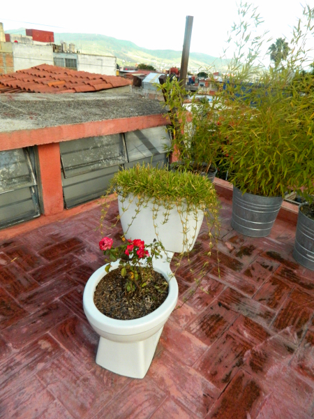 Casa Angel, my hostel of choice in Oaxaca. This toilet used to be in one of their bathrooms. When it stopped working, one of the hostel staff members brought it up to the roof and converted it into a flower pot.