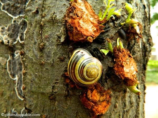 A snail in the Tiergarten in Berlin