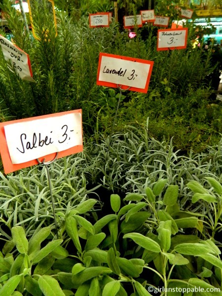 Herb Plants at the Turkish Market in Berlin