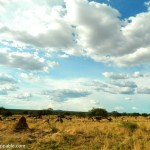 Photo Essay: The Wildlife Experience at Namibia's Okonjima Nature Reserve