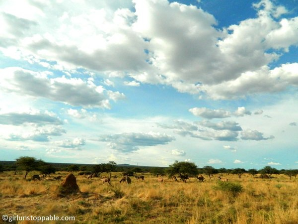 The Okonjima Nature Reserve in Namibia