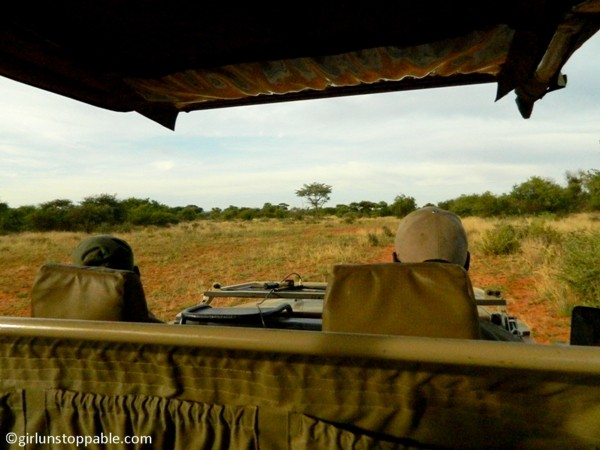 Safari view at Okonjima Nature Reserve in Namibia