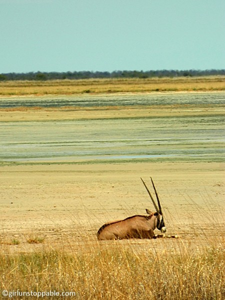 An oryx in Etosha National Park, Namibia