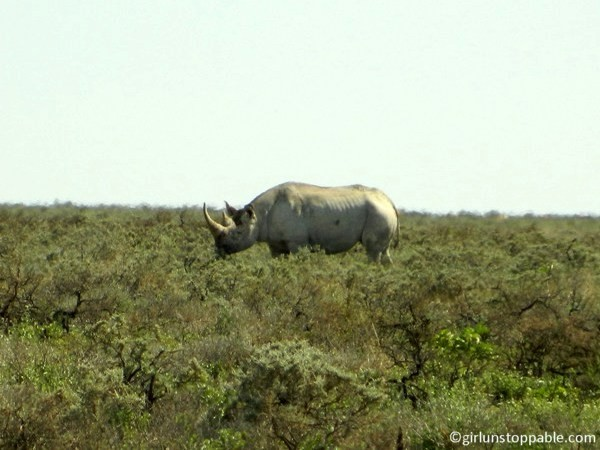 A Rhinoceros in Etosha National Park, Namibia