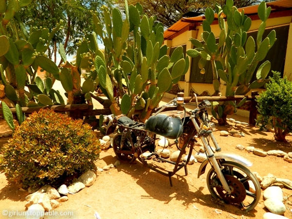 An old motorcycle and prickly pear in Solitaire, Namibia