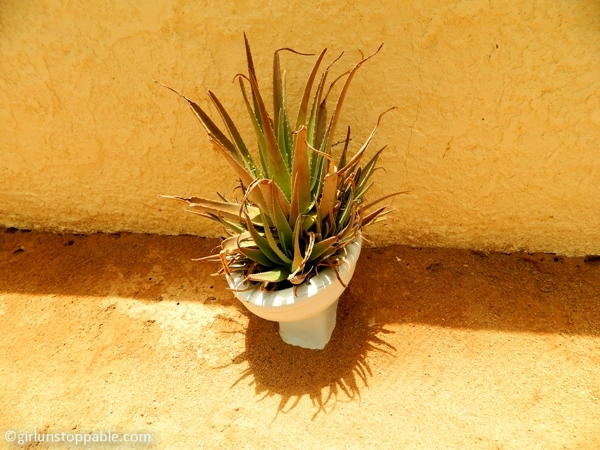 Toilet turned into a planter in Solitaire, Namibia