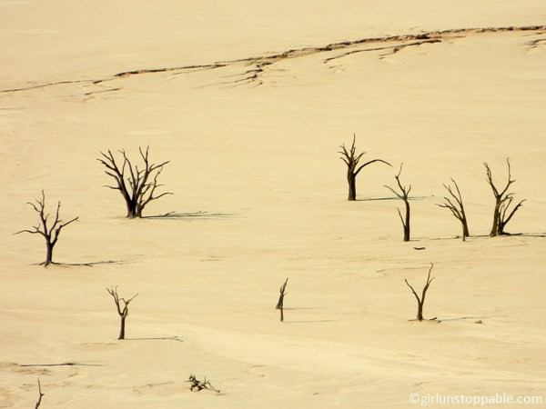 The Deadvlei at Sossusvlei, Namibia