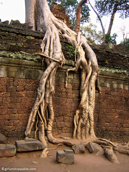Ta Prohm at Angkor, Cambodia
