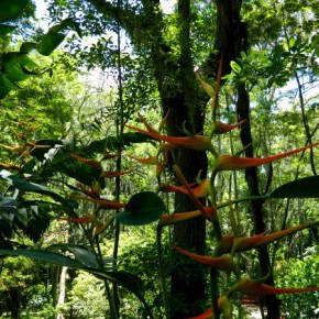 Parque El Gallineral in San Gil, Colombia