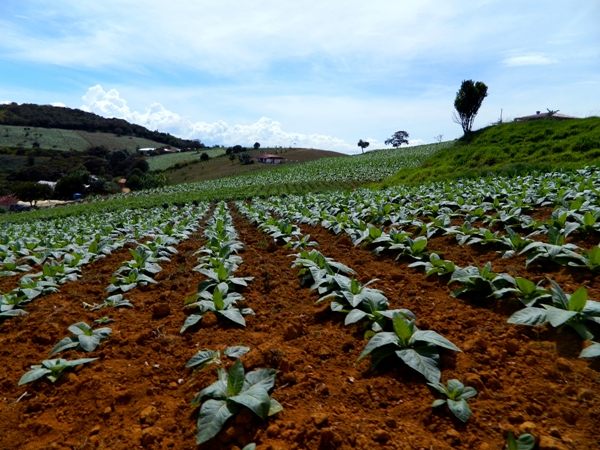 Tobacco farm near San Gil, Colombia