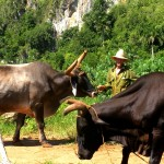 Reflections on Unexpectedly Seeing the Same Cuban Farmer Twice
