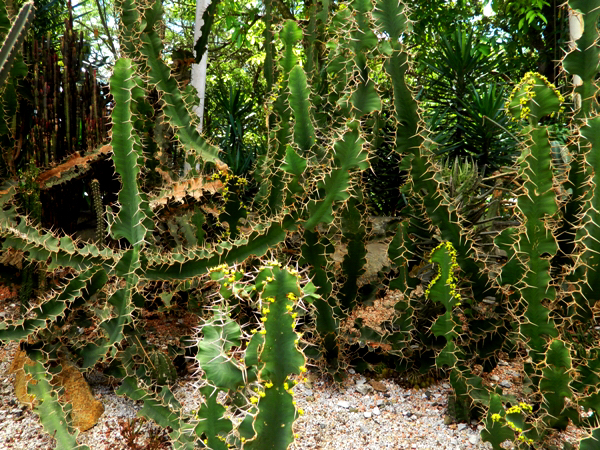 Botanical Garden in Medellin, Colombia