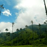 Photo Essay: The Formidable Beauty of the Valle de Cocora