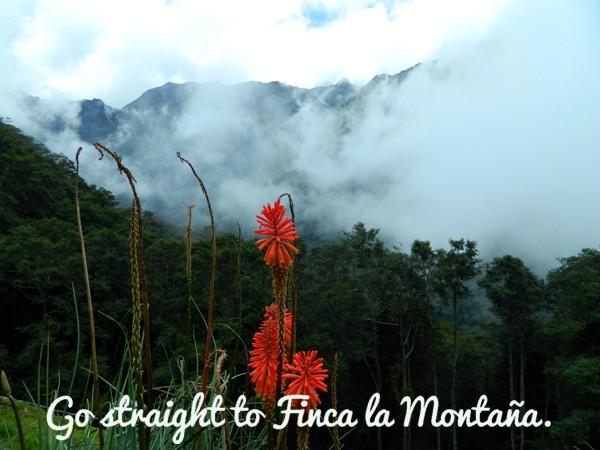 Finca la Montaña at Valle de Cocora, Colombia