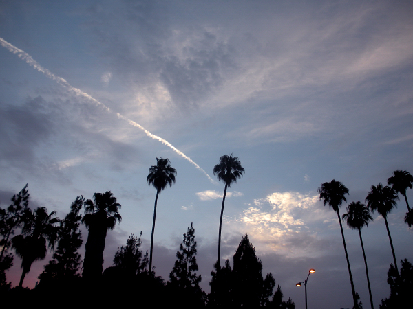 Palm trees and sunset skies in Hollywood, California