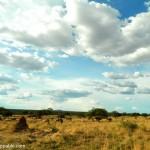 The Okonjima Nature Reserve in Namibia